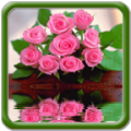 Beautiful Pink Flowers thumbnail