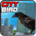 City Bird thumbnail