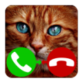 Fake Call Cat thumbnail
