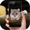 Mouse In Phone thumbnail