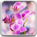 Orchid Live Wallpaper thumbnail