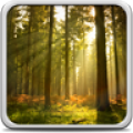 Sunny Forest Live Wallpaper thumbnail