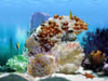 Amazing 3D Aquarium thumbnail