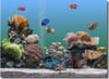 SereneScreen Marine Aquarium thumbnail